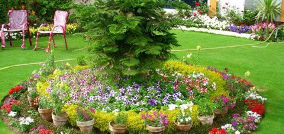 Bahçe Düzenleme ve Bakım Hizmetleri