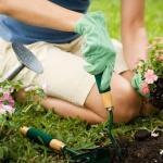 Bahçe Düzenleme Hizmeti Almak İstiyorum, Ne Yapmalıyım?